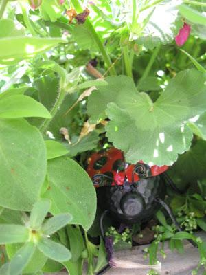 Ladybug peeking out from plants in garden