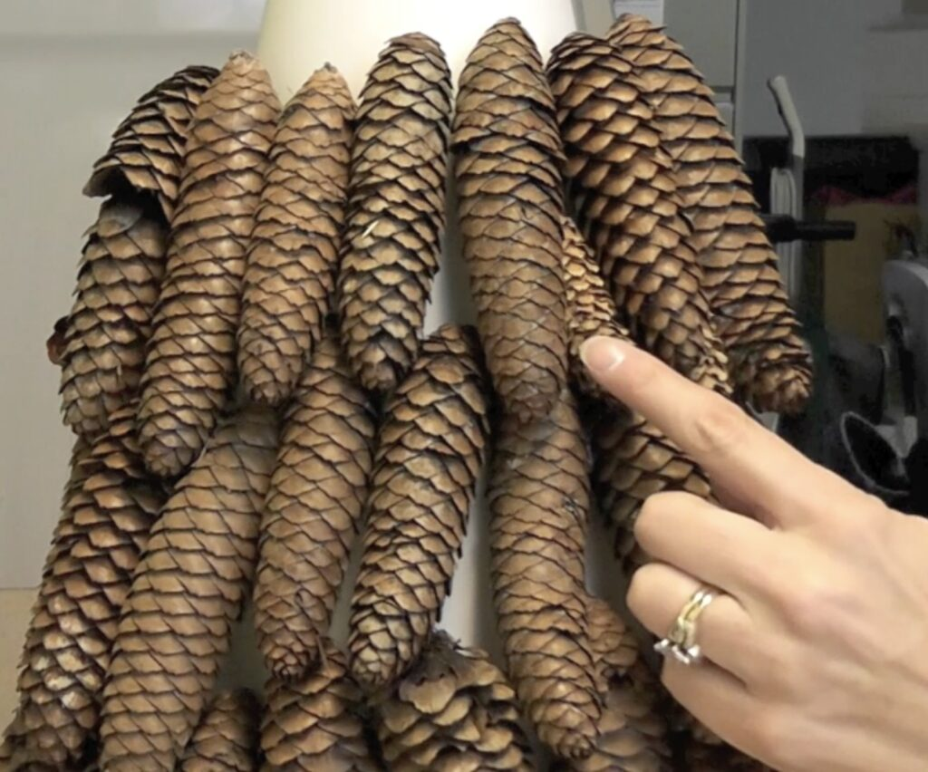 Fill in the spaces between the pine cones with smaller pine cones